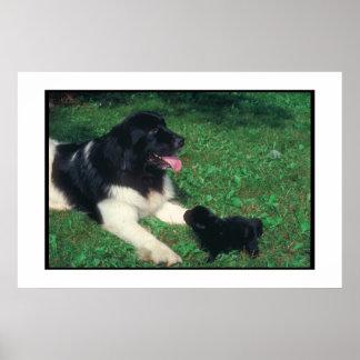 ニューファウンドランドLandseer及び子犬ポスター ポスター