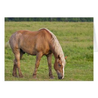 ニューブランズウィック、カナダ。 分野の馬 カード
