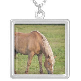 ニューブランズウィック、カナダ。 分野の馬 シルバープレートネックレス