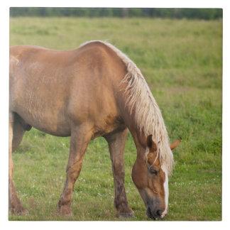 ニューブランズウィック、カナダ。 分野の馬 タイル