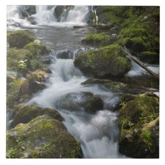 ニューブランズウィック、カナダ。 FundyのDicksonの滝 タイル