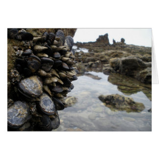 ニューポートビーチの筋肉そして石 カード