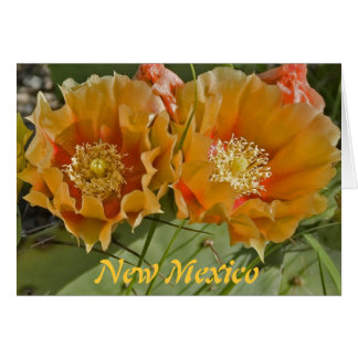 ニューメキシコ-魔法の土地 カード