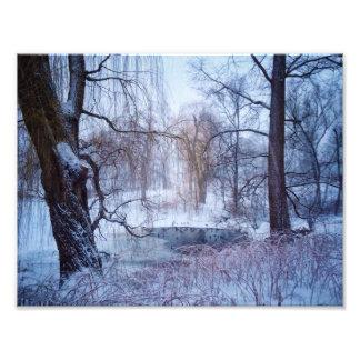ニューヨークのセントラル・パークの凍結する池のアヒル フォトプリント