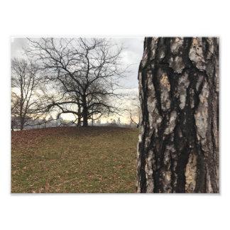 ニューヨークシティNYCの日の出のセントラル・パークの木の写真 フォトプリント