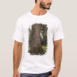 ニレ材のトランクの勉強、c.1821 (油 tシャツ