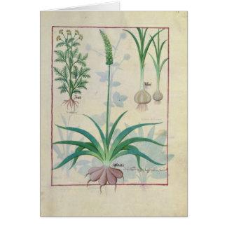 ニンニクおよび他の植物 カード