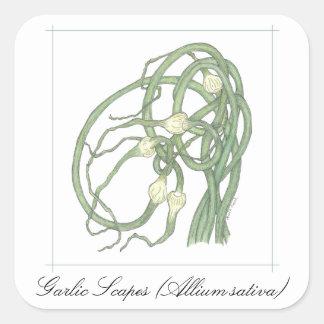 ニンニクのScapesの植物のシール スクエアシール