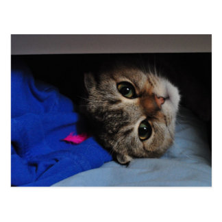 ヌードル引出しの猫 ポストカード