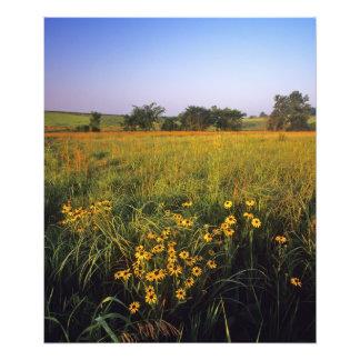 ネイルでtallgrassの草原の注目されたSusansを黒くして下さい フォトプリント