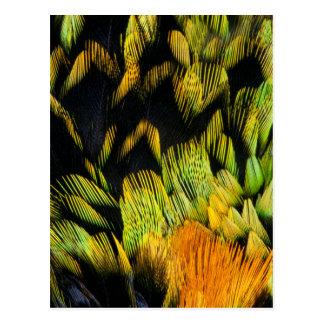 ネオンによって着色されるフウキンチョウ族の羽 ポストカード