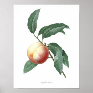 ネクタリンの良質の植物のプリント ポスター