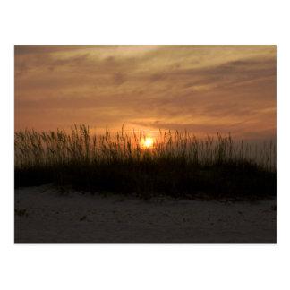 ネコヤナギの後ろの日没 ポストカード