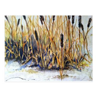 ネコヤナギの水彩画 ポストカード