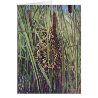 ネコヤナギの沼地ミソサザイの巣 カード