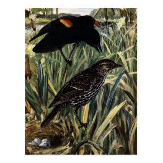 ネコヤナギの赤飛んだクロドリそして巣 ポストカード
