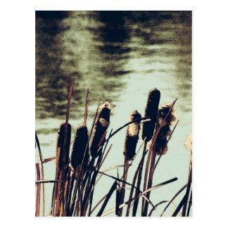 ネコヤナギ、池の植物 ポストカード