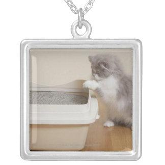 ネコ用のトイレを見ているペルシャの子ネコ シルバープレートネックレス