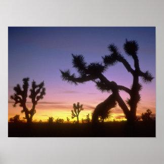 ネバダ。 米国. ジョシュアツリーのユッカのbrevifolia) ポスター