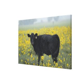 ネブラスカのヒマワリの中の子牛 キャンバスプリント