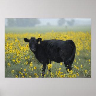 ネブラスカのヒマワリの中の子牛 ポスター