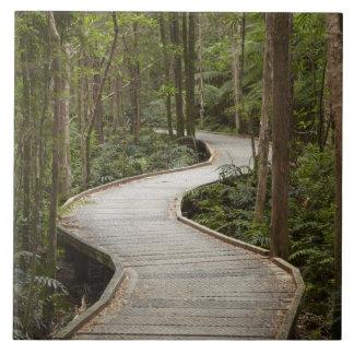 ネルソンの滝、フランクリン-ゴードンへの遊歩道 タイル