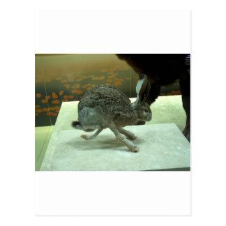 ノウサギの(非Krishna)ランニング。 剥製術の標本 ポストカード