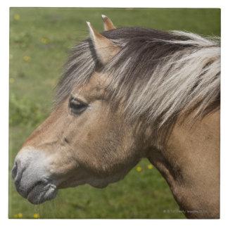 ノルウェーのフィヨルドの馬 タイル