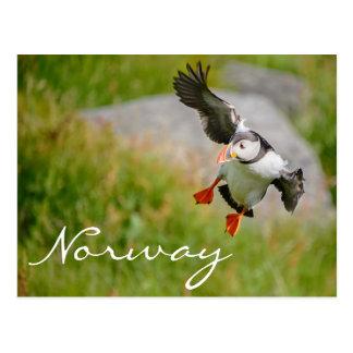 ノルウェーの郵便はがきのツノメドリの飛行 ポストカード