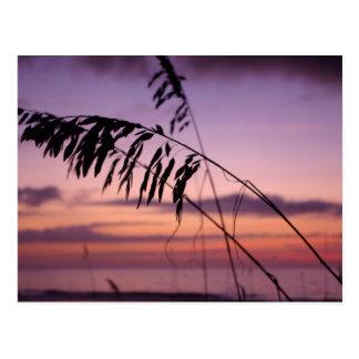 ノースカロライナの海のオートムギ ポストカード