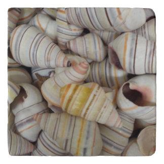 ハイチの木のかたつむりの貝 トリベット
