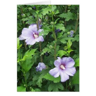 ハイビスカスの花ムクゲ カード