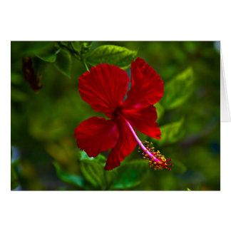 ハイビスカスの花 カード