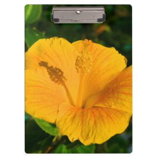 ハイビスカスの黄色い花明るい色の植物の花 クリップボード