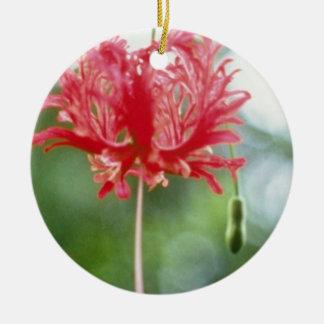 ハイビスカスのSchizopetalus (縁を付けられたハイビスカス)の花 セラミックオーナメント