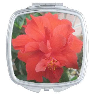 ハイビスカスは赤い花柄を植えます