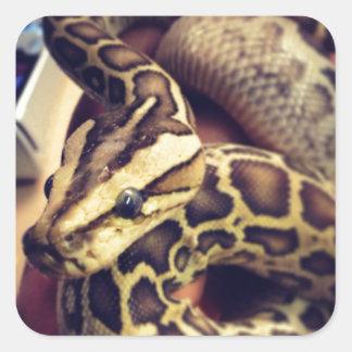 ハイポのベビーのビルマの大蛇の写真の設計 スクエアシール