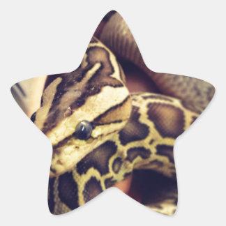 ハイポのベビーのビルマの大蛇の写真の設計 星シール