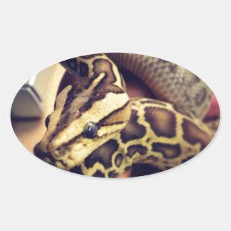 ハイポのベビーのビルマの大蛇の写真の設計 楕円形シール