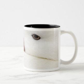 ハクガンの陳のcaerulescens)、捕虜 ツートーンマグカップ