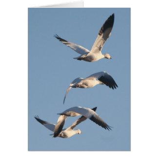 ハクガンの鳥の野性生物動物の写真撮影 カード