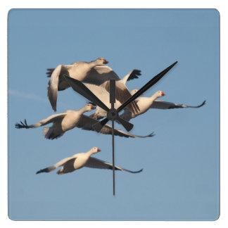 ハクガンの鳥の野性生物動物の柱時計 スクエア壁時計