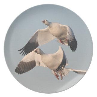 ハクガンの鳥の野性生物動物飛行 プレート
