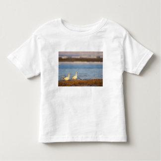 ハクガン、陳のcaerulescens、aの組 トドラーTシャツ
