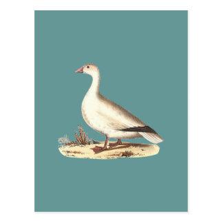 ハクガン (Anserのhyperboreus) ポストカード