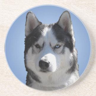 ハスキーなコースターのハスキーなマラミュートのそり犬のコースター コースター