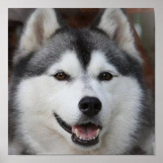 ハスキーな犬のプリント ポスター