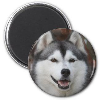 ハスキーな犬の磁石 マグネット