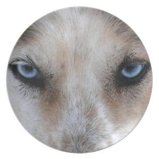 ハスキーな青い目のパーティのプレート プレート