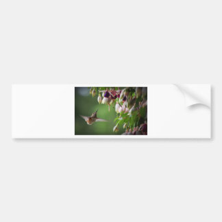 ハチドリおよびFushiaの植物 バンパーステッカー